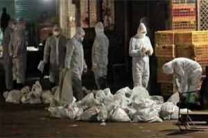 Virus Flu Burung Jenis Baru H7N9